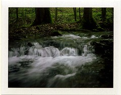 (babireley) Tags: ansleyhollow ansleyrun susquehannockstateforest polaroid250 fujifilmfp100c pawilds pottercounty pa pottercountypa