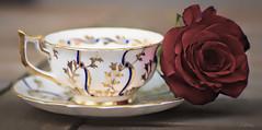 Large enough (Vanessa away on vacay) Tags: 90mm teacup rose chinadishes gold blue vanessasbackyard copyrightvanessabartosek morningmoments macromademoiselle