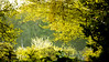 18-04-16 pan baumkr jung sonauf dsc09377-1 (u ki11 ulrich kracke) Tags: baumkronejung bokeh durchblick gegenlicht kontrast nah panorama sonnenaufgang reedance sunsise