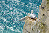 ... love me tender ... (wolli s) Tags: dover gb sea seemöwe england seagull saintmargaretsatcliffe vereinigteskönigreich nikon d7100 cliff white uk bird möwe gull