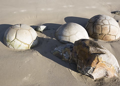 Moeraki Boulders (fantommst) Tags: lisaridings fantommst moeraki boulders nz newzealand southisland geometric ancient stone rock sea beach unique old omaru otago