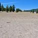 Pumice Desert (north of Crater Lake Caldera, Oregon, USA) 12