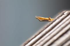 splinter (jlodder) Tags: splinter railing wood macromondays jagged