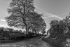 English Country Lane (PapaPiper (Travelling with my camera)) Tags: england unitedkingdom uk countryside countrylane mono monochrome trees road lane blackwhite bw