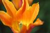 orange one (Uncle Tee TX) Tags: macromademoiselle bulgaria sofia sony a7ii fe9028 macrog