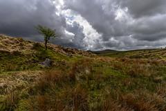 Hole in the sky (trojanhorse1956) Tags: dartmoor devon blacktor tree clouds nikon d750