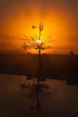 Sunrise || Richmond Lowlands || Sydney (David Marriott - Sydney) Tags: richmondlowlands newsouthwales australia au sunrise windmill tree silhouette dawn cow reflection pond dam nsw sydney richmond lowlands