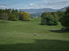 Lakeland landscape (World of Izon) Tags: lakedistrict englishlandscape lowwray lakewindermere sheep grass trees mountains sky clouds