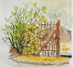 Petit bout de verdure. (cecile_halbert) Tags: peinture aquarelle nature jardin plantes watercolor painting plants garden lanscape sketch sketching sketchbook artbook