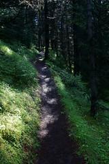 OpalHiills00015 (jahNorr) Tags: summertrip 2012 canadaalbertajaspernationalparkopalhills