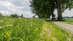 Hitdorf - Frühlingswiese (KL57Foto) Tags: 2018 deutschland europa fluss frühling germany hitdorf kl57foto landschaften leverkusen leverkusenhitdorf mai nrw natur nordrheinwestfalen omdem1 olympus rheinland