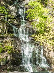 Greenbrook Falls, Palisades Interstate Park, Alpine, New Jersey (jag9889) Tags: 2018 20180511 alpine bergencounty cascade gardenstate greenbrook nj newjersey newjerseysection outdoor pip palisades palisadesinterstatepark park rock usa unitedstates unitedstatesofamerica waterfall jag9889
