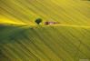 Per le colline marchigiane... (Valentina Fazzini) Tags: landscape paesaggio linee campagna country cottage green verde casolare tramonto sunset curve curves italy marche tree albero hill