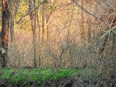 Forest Light (clarkcg photography) Tags: forest woods trees briars bushes brambles light evening golden rays landscape saturdaylandscape landscapesaturday 7dwf