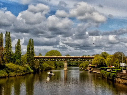 Worcester Railway bridge with gull