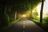 Alley in the Early Morning (johaennesy) Tags: warm soft landscape alley trees symmetry vanishingpoint war morning sunrise pentaxian opensourcesoftware gimp rawtherapee symmetric landschaft wood street road lonely athmospheric