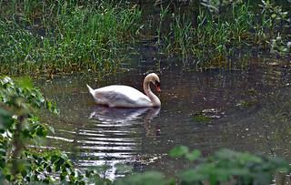 Nello stagno / In the pond
