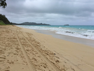 Tracks on Waimanalo Beach