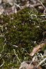 2 (anadanaila) Tags: nature moss spring green