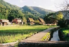 A001172-R1-12-12A (cactus_chef) Tags: japan 2016 olympus om1 fujifilm fuji film iso200 iso 200 iso400 olympusom1 travel 28mm 50mm 18 f18 f28 om bellhowell 50mmf18 28mmf28 backpacking shirakawago shirakawa gifu gifuprefecture traditionalvillage village traditional historic unesco unescoheritage ricefield rice fields ricepaddy