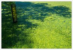 A Poisonous Lake (II)