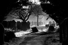 Cemetery mists. (pstone646) Tags: cemetery blackandwhite graves gravestones weather monochrome gloom trees nature shadows