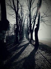 Redlections of the shadows (astellmusic) Tags: road tree river loneliness park shadows walk serbia pirot samsung