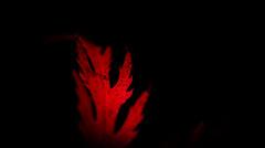 Low Key - Macro Monday's (spiderstreaky) Tags: leaf closeup hmm vivid beautiful abstract macromondays beauty dof macro delicate red nature close lowkey delightful