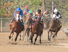2018 Pimlico Race track (105) (maskirovka77) Tags: pimlico dirt mare race racehorse threeyearold turf yearling