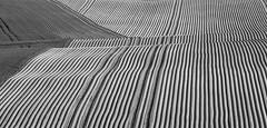 field (senn_b) Tags: plough abstract abstrait formesabstraites field landscape belgium belgien belgië belgique wallonia wallonie boussulezwalcourt blackandwhite blackwhitepassionaward noiretblanc schwarzweiss canonef300mmf4lisusm paysage schwarzweis