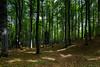 Faggeta (Puma 68) Tags: cansiglio bosco foresta woodland forest alberi tree trees albero canonef1635mmf28liiusm