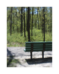 Park Bench and Spring Woods (Sean Anderson Media) Tags: pentaxq parkbench spring woods forest nature landscape lofi lofilens vintage retro blurred softfocus pentax07mountshieldlens mountshieldlens pentax green trees path park weirdlens cultlens