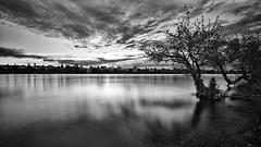Morning Reflections II (PNW-Photography) Tags: morning reflection mirror sky skyscape waterscape water river columbiariver richland kennewick pasco washington dramatic hdr sonya6000 sony rokinon12mm rokinon 12mm