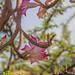 Habarti caa.! Somali Flowers  #somalia #photo #xaajibaaruud #dalmushaaxe #flowers #world