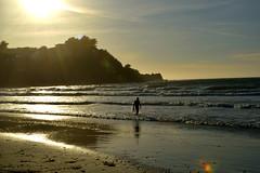 Linda Mar Beach 17 (TheseusPhoto) Tags: beach waves nature naturephotography natureporn beautyinnature surfing surfboard guy goldenhour ocean shore shoreline color sun sunset reflection light