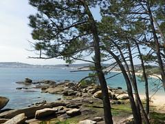 Paseo por la playa de Coroso-Ribeira(Coruña( (2) (Los colores del Barbanza) Tags: bluesky paseo pino playa coroso ribeira barbanza coruña galicia españa