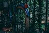 IMG_2533 (Aaron Belcher) Tags: savannah georgia scad nature aesthetic canon photography college art design