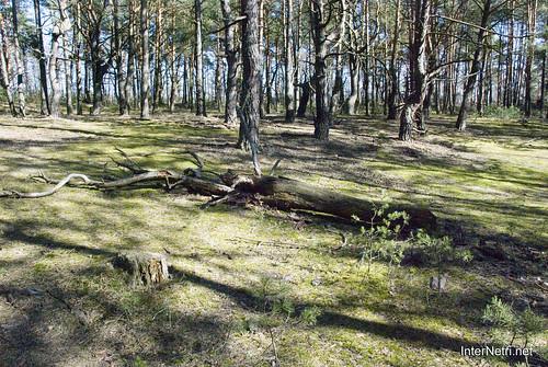 Волинський ліс InterNetri Ukraine 1287612259