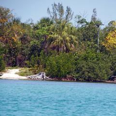 Trees By the Sea (soniaadammurray - On & Off) Tags: digitalphotography sea trees path land sky water birdplatform treemendoustuesdays reflections shadows