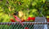 Mr. Cardinal (Sue90ca More Hours At Work...I'll Never Catch Up) Tags: canon 6d cardinal male