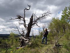 Struck by Lightening  HTMT (Mr. Happy Face - Peace :)) Tags: htmt forest albertabound canada yyc kananaskis nature scenery happytreemendoustuesday theme 7dwf smugmugflickr art2018 wildflowers candid wilderness