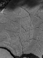 mutawintji heritage tour - 1403 (liam.jon_d) Tags: nsw mono aboriginal aboriginalguide aborigine animal arty australia australian bw billdoyle blackandwhite bynango bynangorange bynguano bynguanorange carving cultural culturalsite culture gallery glyph guidedtour heritage heritagesite indigene indigenous inland intaglio kangaroo landscape monochrome mootwingee mootwingeenationalpark mutawintji mutawintjiheritagetours mutawintjinationalpark nationalpark nationalparksandwildlife newsouthwales outback outbacknewsouthwales outbacknsw party peckedintaglio petroglyph reserve sacredsite tour touring west western westernnewsouthwales westernnsw pickmeset peopleimset portraitimset