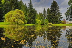Canon EOS 5D Mark IV - 0C4A0918 hdr (rogerbtree) Tags: gardens oldgrowth nature wildlife flowers waterfeatures ponds trees hdrimagery reflections spring bainbridgeisland canon canon5dmkiv pacificnorthwest