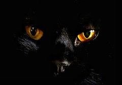 Kitty (kmetz12.km) Tags: cat cateyes kitty gato sonya6000 closeup sonycamera sonyphotography animals pets catmoments meow sonyalpha cats