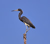 05-06-18-0016293 (Lake Worth) Tags: animal animals bird birds birdwatcher everglades southflorida feathers florida nature outdoor outdoors waterbirds wetlands wildlife wings