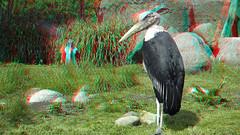 Zoo Blijdorp Rotterdam 3D (wim hoppenbrouwers) Tags: anaglyph stereo redcyan zoo blijdorp rotterdam 3d 18200mmf3556gvr nikkor