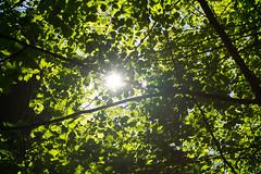 2018-05-06-15.08.45 (aliasjan) Tags: baum grün hamburg sonne blätter gegenlicht