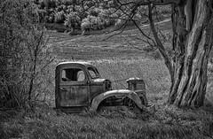 Stuck Between an Elderberry and a Dead Walnut (D E Pabst Photography) Tags: neglected columbiacounty washington decay automotive truck blackandwhite dayton monochrome southeastwashington abandoned