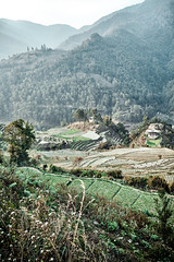 Bhutan: Rice Terraces II. (icarium.imagery) Tags: bhutan travel captureone farmhouse forest gasavalley himalayas nature naturallight rural canoneos5dsr canonef1635mmf4l