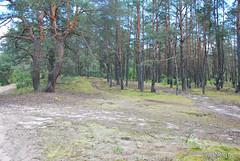Волинський ліс InterNetri Ukraine 1305948398